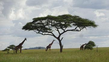 case-study-africa